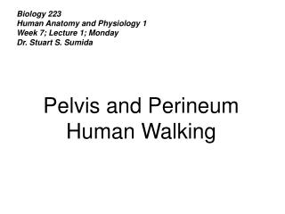 Biology 223 Human Anatomy and Physiology 1 Week 7; Lecture 1; Monday Dr. Stuart S. Sumida