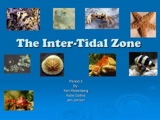 The Inter-Tidal Zone