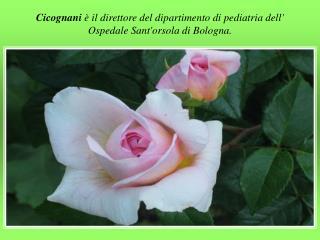 Cicognani  è il direttore del dipartimento di pediatria dell' OspedaleSant'orsola di Bologna.