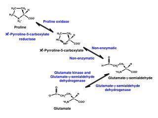  KG + 3NADPH + NH 3  + 2ATP ---> proline + 3NADP +  + 2ADP + 2P i
