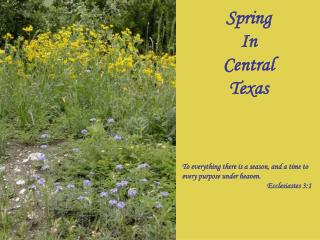 Spring In Central Texas