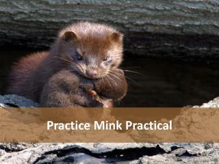 Practice Mink Practical