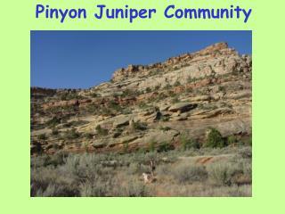 Pinyon Juniper Community