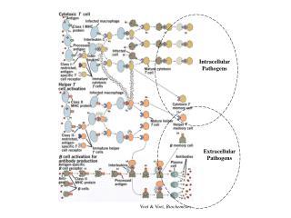 Voet & Voet,  Biochemistry