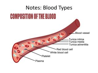 Notes: Blood Types