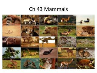 Ch  43 Mammals