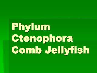 Phylum Ctenophora Comb Jellyfish