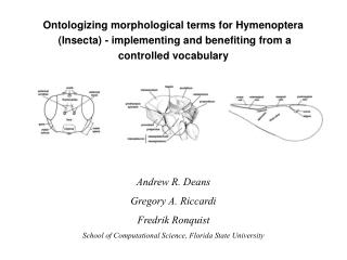 Ontologizing morphological terms for Hymenoptera  (Insecta) - implementing and benefiting from a