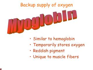 Similar to hemoglobin Temporarily stores oxygen Reddish pigment Unique to muscle fibers