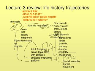 Lecture 3 review: life history trajectories