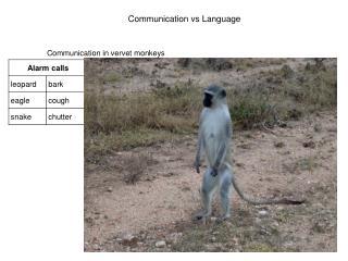 Communication in vervet monkeys