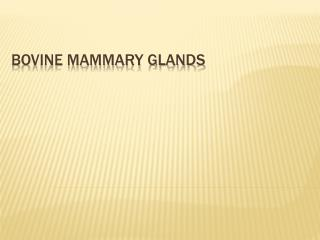 Bovine mammary glands