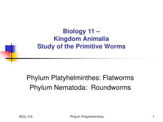 Biology 11 –  Kingdom Animalia Study of the Primitive Worms