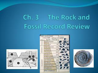 Ch. 3     The Rock and     Fossil Record Review