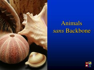 Animals  sans  Backbone