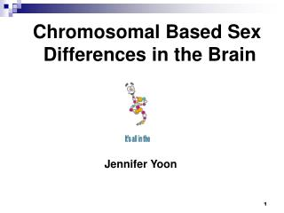 Chromosomal Based Sex                Differences in the Brain
