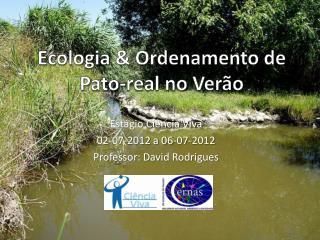 Ecologia & Ordenamento de  P ato-real no Verão
