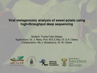 Sweet potato  viruses and their effects on production