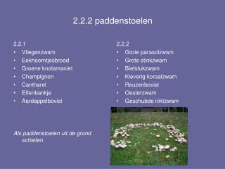 2.2.2 paddenstoelen