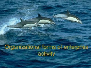 Organizational forms of enterprise activity