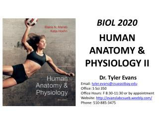 HUMAN ANATOMY & PHYSIOLOGY II