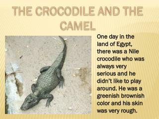 THE CROCODILE AND THE CAMEL