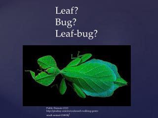 Public Domain CCO pixabay/en/cockroach-walking-green-small-animal-238938 /