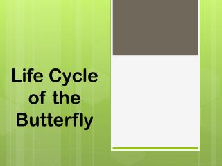 Life Cycle of the Butterfly
