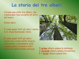 C'erano una volta tre alberi, che crescevano l'uno accanto all'altro nel bosco. Erano amici.