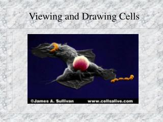 Viewing and Drawing Cells