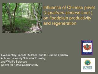 Eve Brantley, Jennifer Mitchell, and B. Graeme Lockaby Auburn University School of Forestry