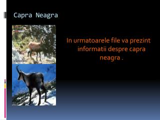 Capra  Neagra