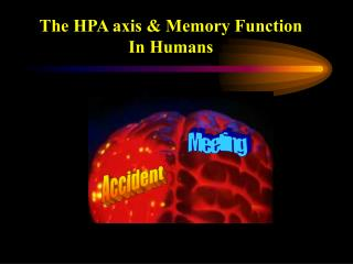 The HPA axis & Memory Function In Humans
