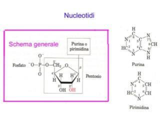 I Nucleotidi sono i principali fornitori dell' energia richiesta nei processi cellulari