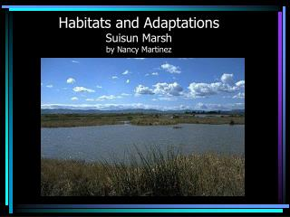 Habitats and Adaptations Suisun Marsh by Nancy Martinez