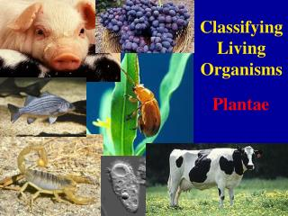 Classifying Living Organisms