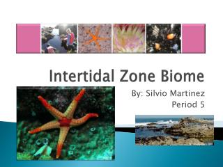 Intertidal Zone Biome