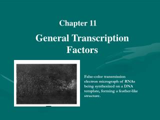 General Transcription Factors