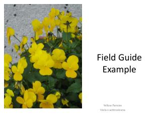 Field Guide  Example