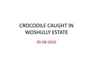 CROCODILE CAUGHT IN WOSHULLY ESTATE