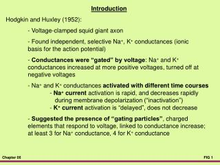 Introduction Hodgkin and Huxley (1952): 	- Voltage-clamped squid giant axon