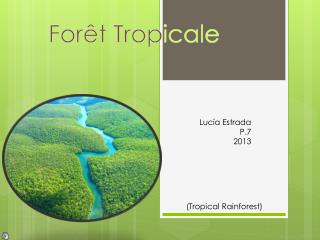 Forêt T rop icale