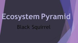 Ecosystem Pyramid