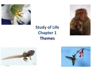 Study of Life Chapter 1 Themes