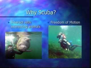 Why Scuba?
