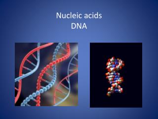Nucleic acids DNA