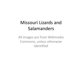 Missouri Lizards and Salamanders