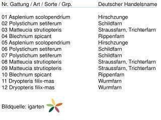 Nr. Gattung / Art / Sorte /  Grp . Deutscher Handelsname 01  Asplenium scolopendrium Hirschzunge