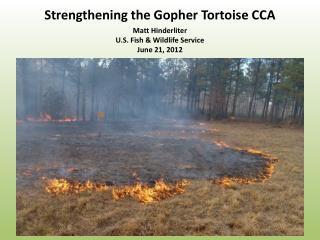 Strengthening the Gopher Tortoise CCA