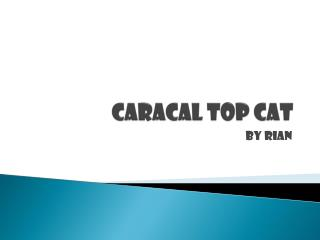 Caracal Top Cat